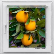 Рулонная штора с фотопечатью Фрукты - Апельсины